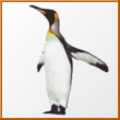 Penguin.At